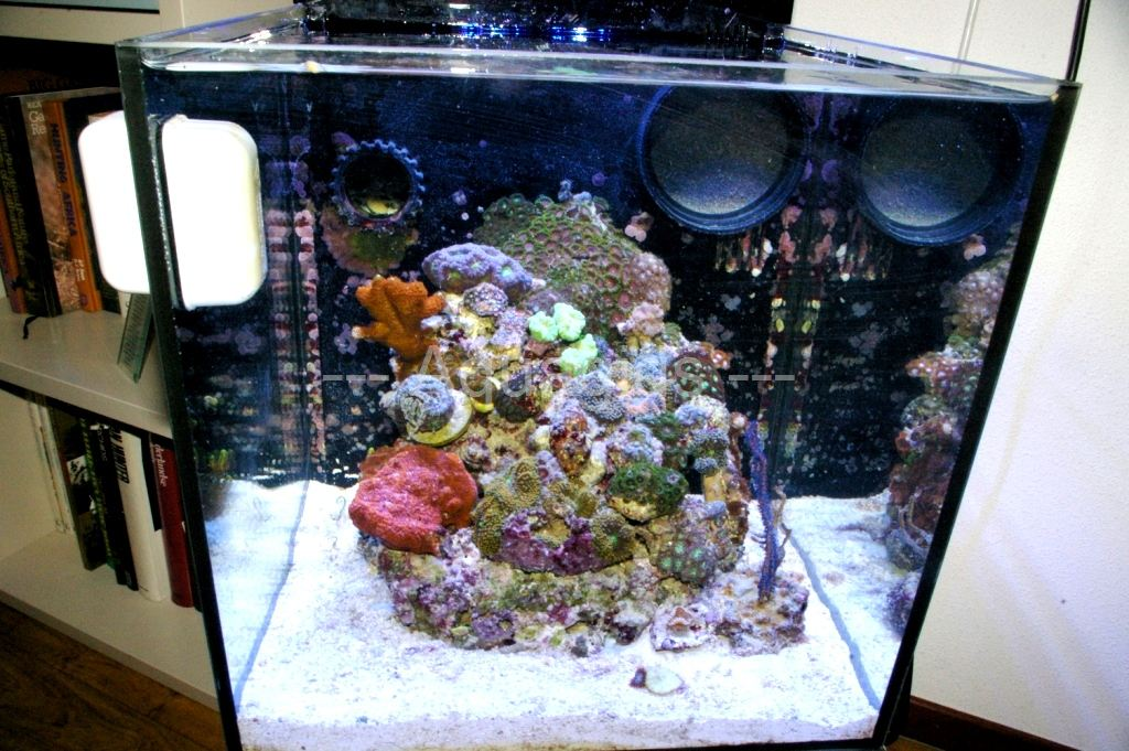 Nano zeeaquarium van Ruud Verdonk